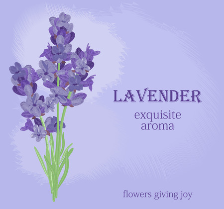 violet flowers: The background for the text label of the packaging the card with lavender flowers.