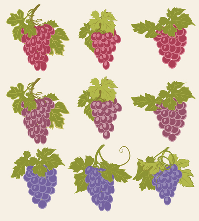 bunches: A set of bunches of grapes of different colors.