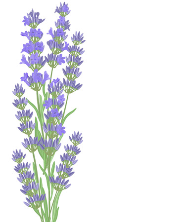 The background for the text label of the packaging the card with lavender flowers. Vektoros illusztráció