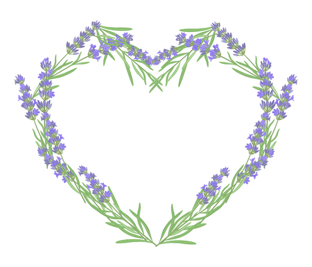 fragrant bouquet: Branch of flowers of lavender. Illustration