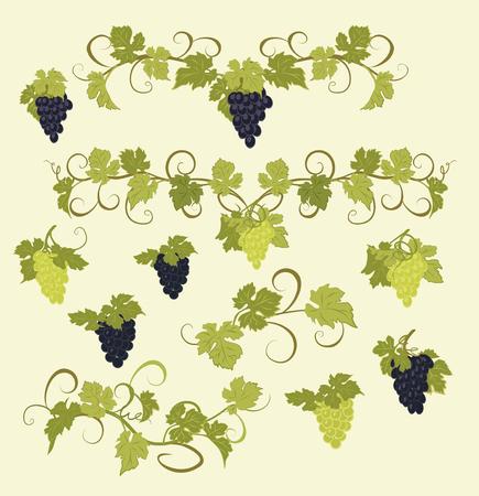 Design elementen met trossen druiven en wijnstokken in vintage stijl.