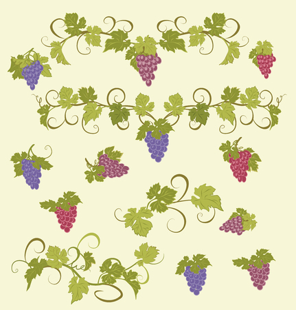 bunches: Design elements with bunches of grapes and vines in vintage style.