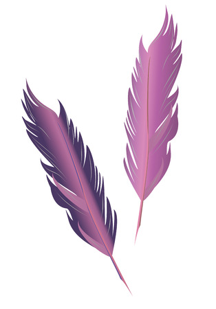 Set of bird feathers. Two vector isolated feather in vintage style.