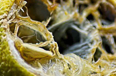 Rotten half lemon macrophotography on black background