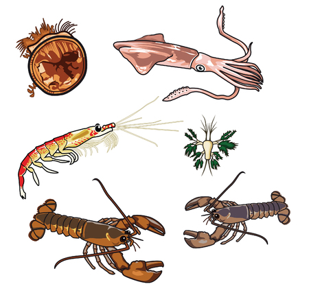 Vector illustrations of Sea creatures Illustration