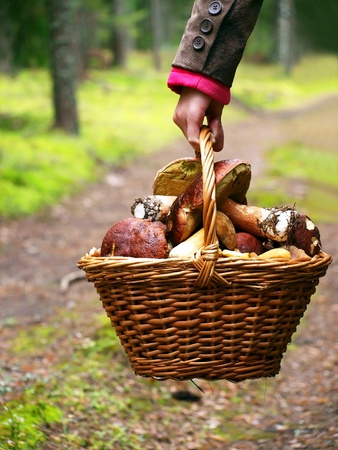 Basket with mushrooms in girl hand photo