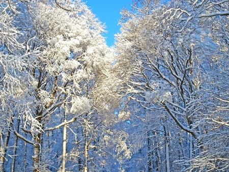 Winter trees Stock Photo - 8786607