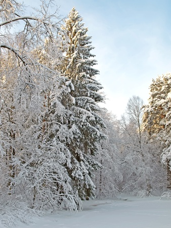 Winter landscape with different trees