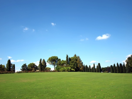 Field with different trees and green grass