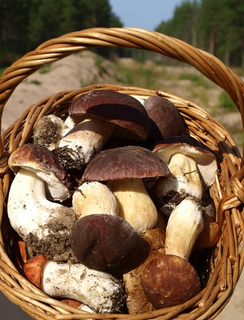 Basket with good, luxury mushrooms          photo