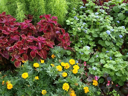 Different flowers  in the flowerbed photo