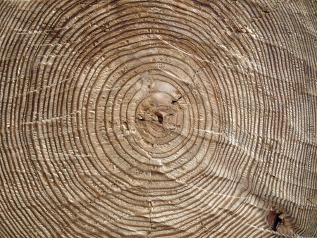 Wooden background. Picture is good for web design and different collages as a texture          photo