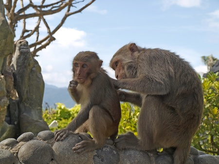 Funny monkeys        photo