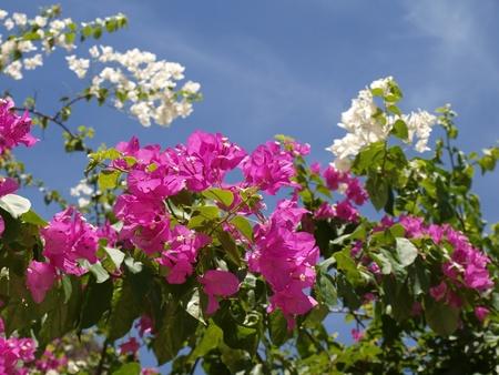 Sunny tree flowers   photo