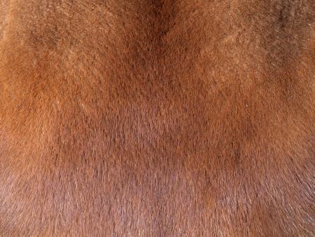 Fur coat from mink Stock Photo - 18868453