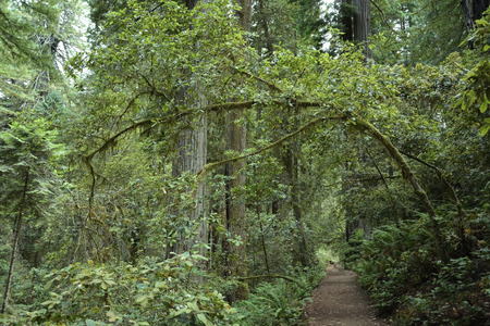 grapple: Redwoods forest national park