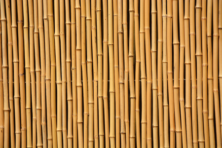 Bamboo wall photo