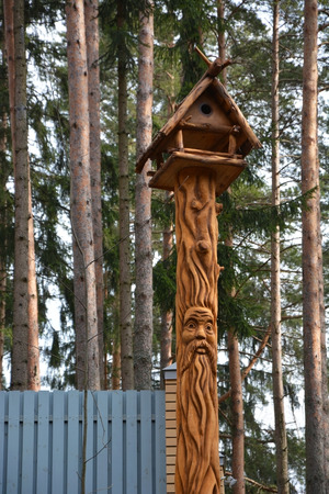 face in tree bark: Funny Wooden mask on the fir tree trunk