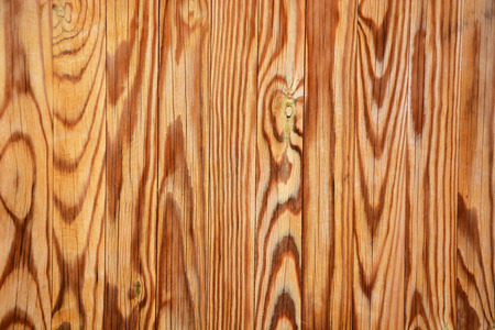 ebony tree: Wooden texture. Picture can be used as a background