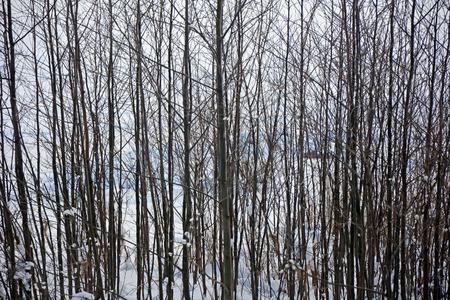 Winter forest-winter scene,background Stock Photo