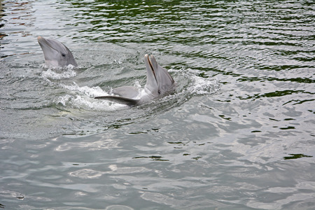 Couple of dolpins at the water