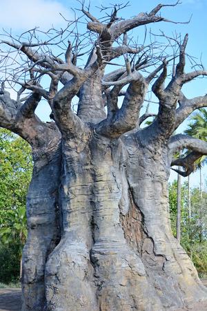 Big and aged baobab tree Stock Photo