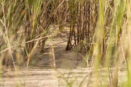 In the jungle of the dunes and the marram grass Stock Photo