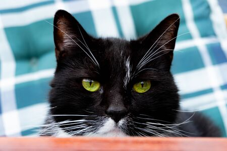 Close up of a black cat with green eyes looking directly at you