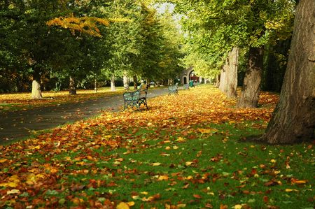 autumn cardiff park with bench, path, and leaves on the field Stock Photo - 6330190