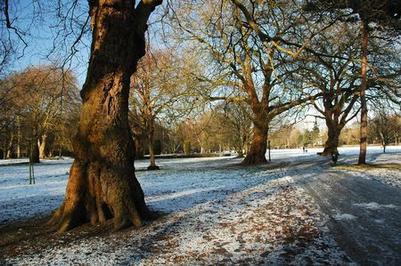 snowy cardiff park with tree and blue ski, horizontally framed picture Stock Photo - 6330264