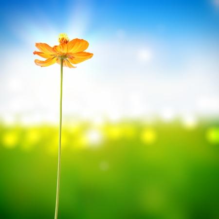 나뭇잎 밝은 배경에 노란색 꽃
