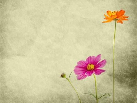 Close Up blomma på Pappersstruktur Stockfoto