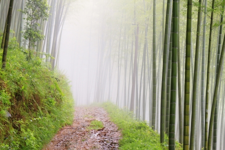 quiet road road in the bamboo forest in the mountains photo