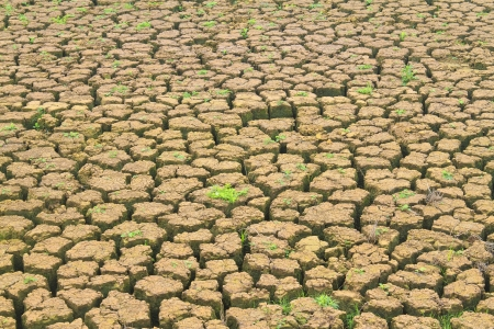 Dried Cracked Chaps Land Clay Earth In Dry Drought Season Stock Photo - 13836793