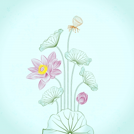 chinese flower: Lotus Painting, line drawing in traditional ink and brush style Illustration