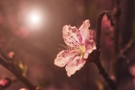 Pink plum blossoms Stock Photo - 18090591