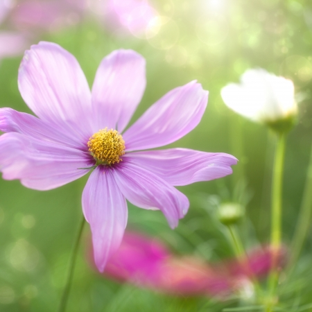 Beautiful Floral Flower Background design, selective focus, shallow depth of field. photo