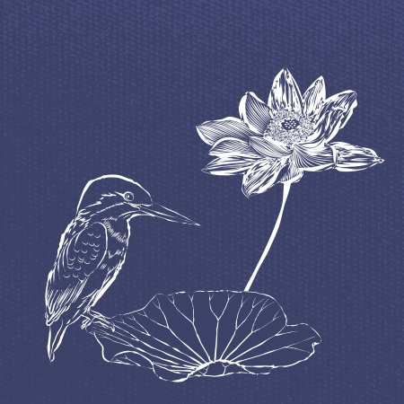 kingfisher: Sketch practices Lotus and birds Illustration