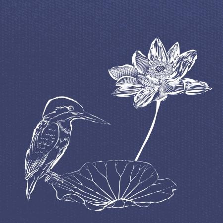 Sketch practices Lotus and birds 矢量图像