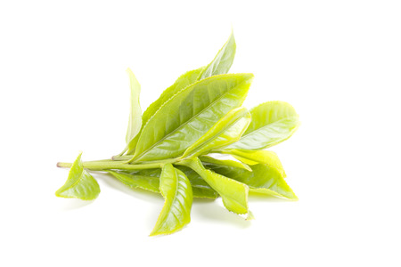 Green tea leaf isolated on white background photo