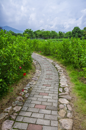 paved: Park trails and Shrub tree