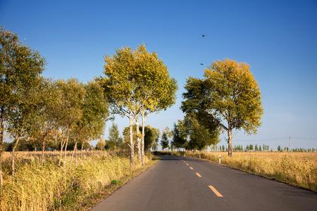 long road: Rural roads