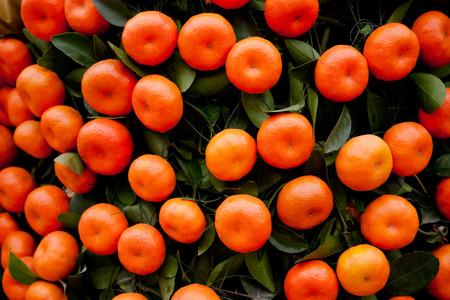 Oranges fruits at tangerine trees photo