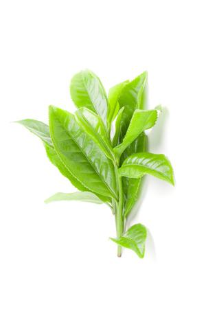 Green tea leaf isolated on white background photo