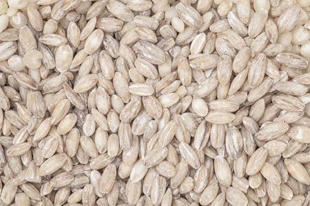 pearl barley: Close up pearl barley rice background