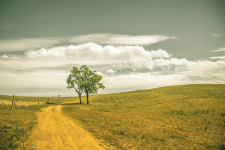 pasturage: Lonely tree and pastures in the highlands landscape Stock Photo