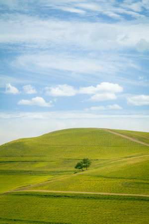 Lonely tree and pastures in the highlands landscape photo