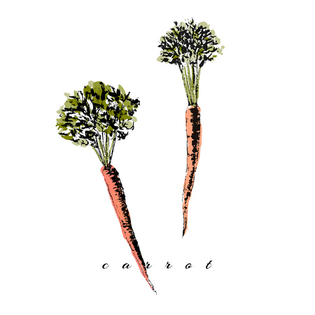 Vector watercolor carrot Ilustração