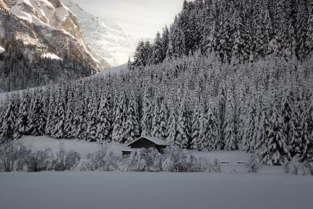 Morning sun in the Alps