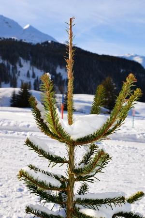 Small Christmas tree with snow